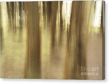Nature Abstract Canvas Print by Gaspar Avila