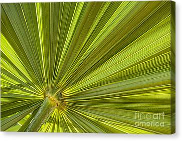 Palm Leaf Canvas Print by Elena Elisseeva