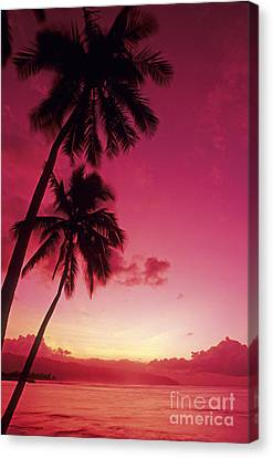 Palms Against Pink Sunset Canvas Print