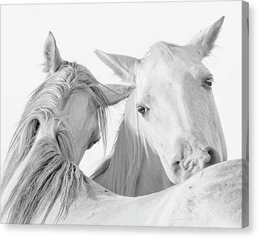 Pals Canvas Print by Ron  McGinnis