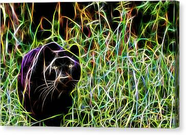 Panther Collection Canvas Print