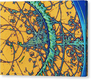 Moving Canvas Print - Particle Tracks by Patrice Loiez, Cern