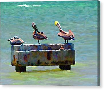 3 Pelicans Canvas Print by David  Van Hulst