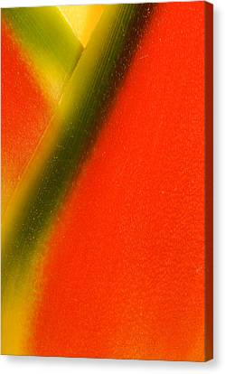 Photograph Of A Lobster Claws Heliconia Canvas Print by Perla Copernik
