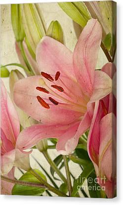 Pink Lilies Canvas Print