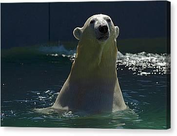 Canvas Print featuring the photograph Polar Bear by JT Lewis