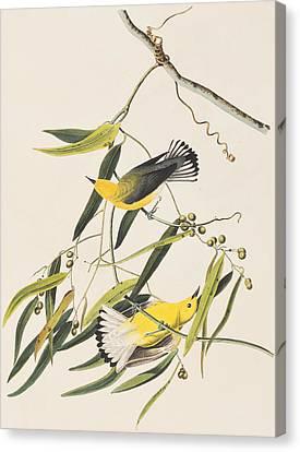 Warbler Canvas Print - Prothonotary Warbler by John James Audubon
