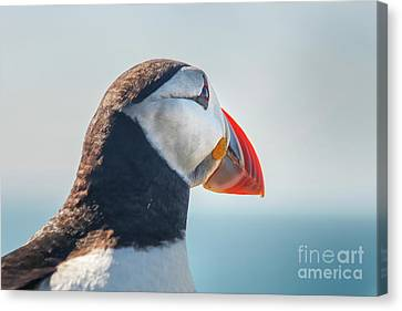 Canvas Print featuring the photograph Puffin In Close Up by Patricia Hofmeester
