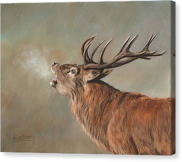 Canvas Print featuring the painting Red Deer Stag by David Stribbling