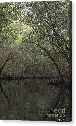 Collier Canvas Print - Red Mangrove Swamp, Florida by Scott Camazine