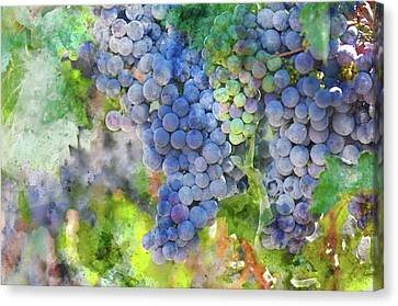 Red Wine Grapes On The Vine Canvas Print by Brandon Bourdages