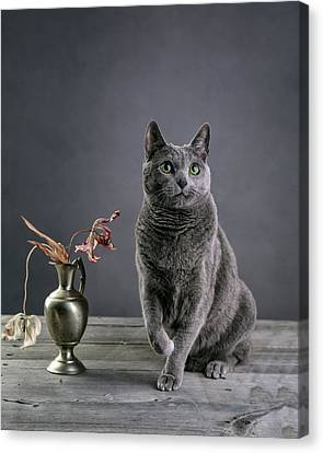 Relaxed Canvas Print - Russian Blue Cat by Nailia Schwarz