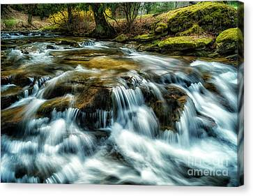 Nicholas County Canvas Print - Spring Along Anthony Creek by Thomas R Fletcher