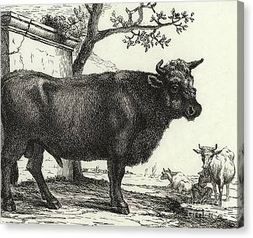 Barn Pen And Ink Canvas Print - The Bull by Paulus Potter