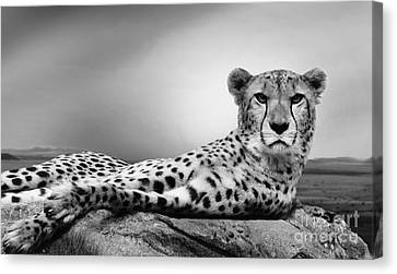 Canvas Print featuring the photograph The Cheetah by Christine Sponchia