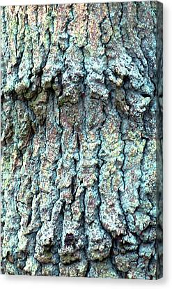Tree Bark Canvas Print by John Foxx