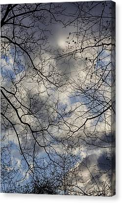 Treees And Clouds Early Spring Canvas Print by Robert Ullmann