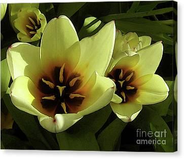 Tulip Lights #4 Canvas Print by Kim Tran