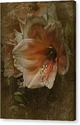 Canvas Print featuring the photograph Vintage Amaryllis by Richard Cummings