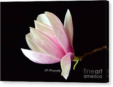 Welcome Spring Canvas Print by Jeannie Rhode