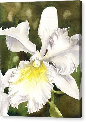 White Cattleya Orchid Canvas Print by Alfred Ng