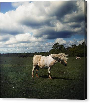 Forelock Canvas Print - Windy Day by Joana Kruse