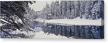 Bough Canvas Print - Winter Snowstorm In The Lake Tahoe by Panoramic Images