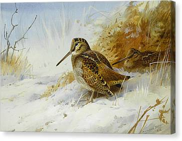 Winter Woodcock Canvas Print by Archibald Thorburn