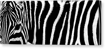 Zebra Stripes Canvas Print by Martin Newman