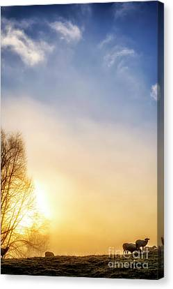 Canvas Print featuring the photograph Misty Mountain Sunrise by Thomas R Fletcher