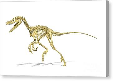 3d Rendering Of A Velociraptor Dinosaur Canvas Print