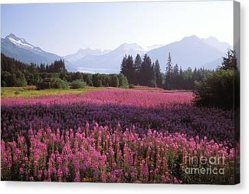 Alaska, Juneau Canvas Print