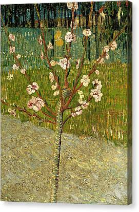 Tree Blossoms Canvas Print - Almond Tree In Blossom by Vincent van Gogh