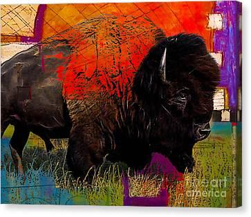 American Buffalo Collection Canvas Print