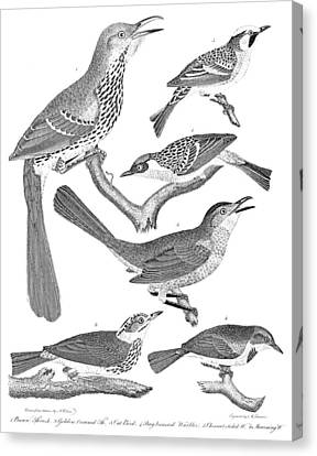 American Ornithology Canvas Print by Granger