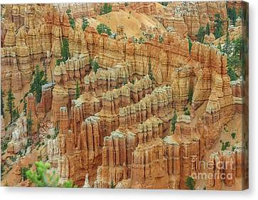 Bryce National Park, Utah Canvas Print by Patricia Hofmeester