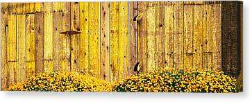 California Golden Poppies Eschscholzia Canvas Print by Panoramic Images