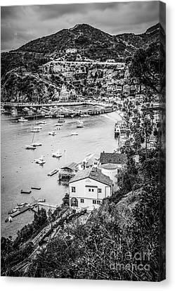 Catalina Island Avalon Bay Black And White Photo Canvas Print by Paul Velgos