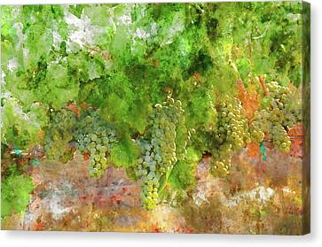 Red Wine Canvas Print - Chardonnay Grapes Close Up by Brandon Bourdages