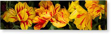 Close-up Of Yellow Flowers Canvas Print by Panoramic Images