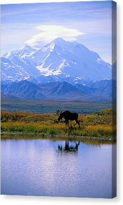 Calming Canvas Print - Denali National Park by John Hyde - Printscapes