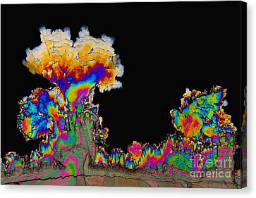 Dopamine Hydrochloride, Polarized Lm Canvas Print by Antonio Romero