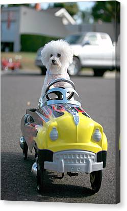 Fifi Goes For A Ride Canvas Print by Michael Ledray