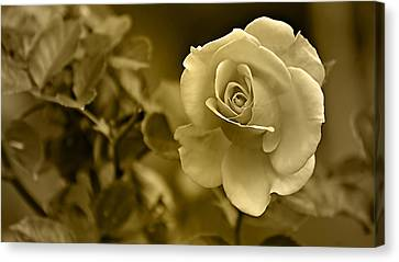 Floral Gold Collection Canvas Print by Marvin Blaine