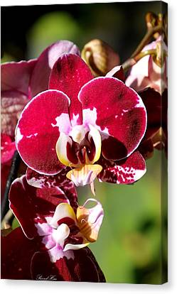 Canvas Print featuring the photograph Flower Edition by Bernd Hau