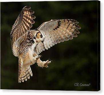 Great Horned Owl Canvas Print by CR Courson
