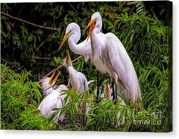 Canvas Print - Great White Egret Family by Paulette Thomas