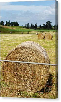 Hay Bales Canvas Print by Les Cunliffe