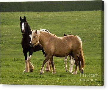Horses Canvas Print by Angel  Tarantella