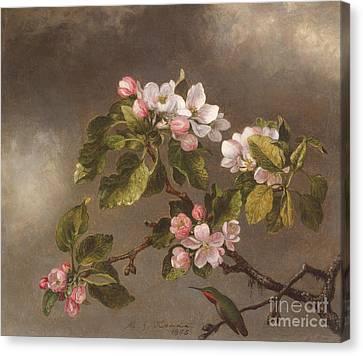 Hummingbird And Apple Blossoms Canvas Print